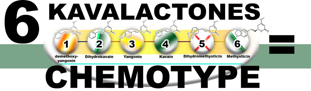 Six major kavalactones make up the chemotype for each kava.